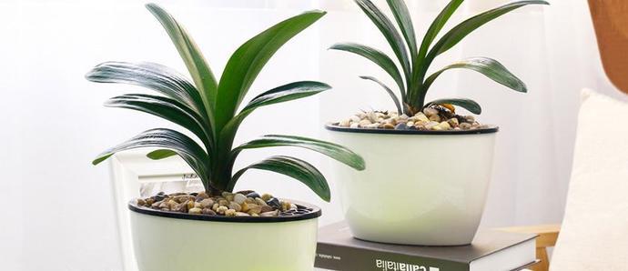 春天到,家里摆放什么绿植才更合适?
